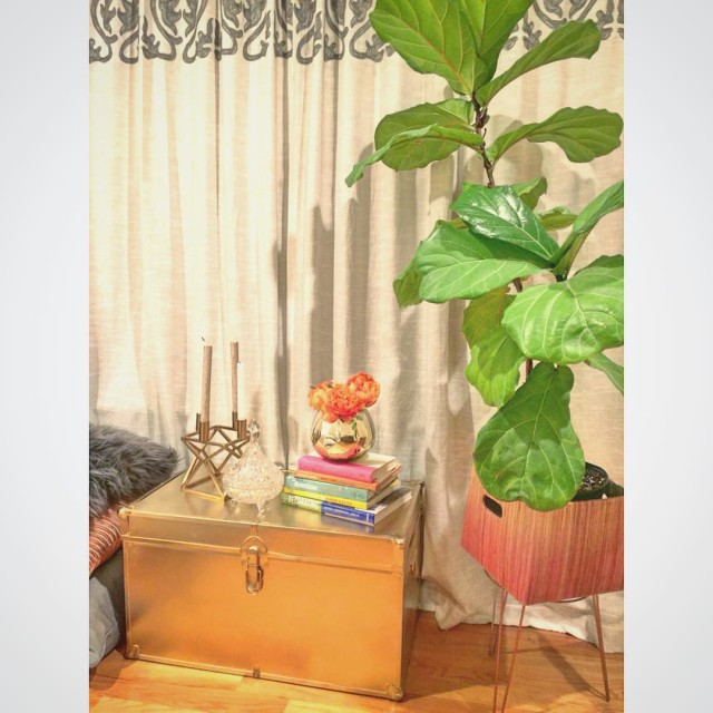 myeclecticnestI may or may not have stalked this golden trunk until the price was so unbelievably good that I was left with no choice but to bring it home...... but maybe I didn't do that at all?#thriftscorethursday