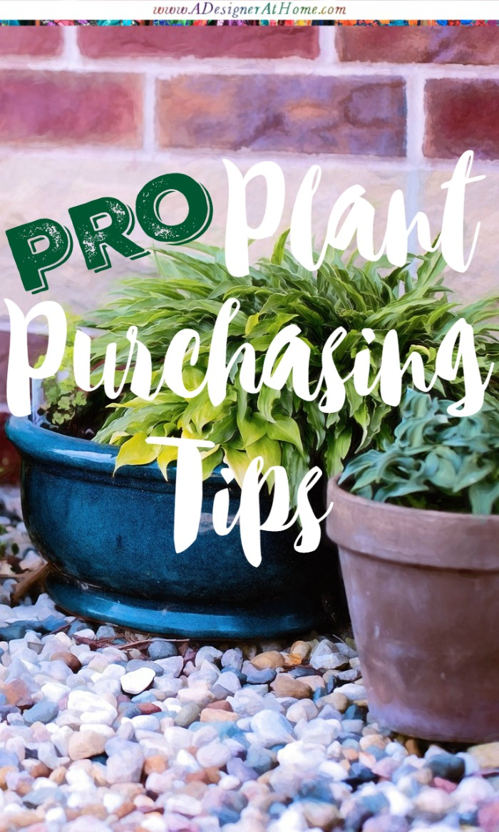 Pro Plant Purchasing Tips