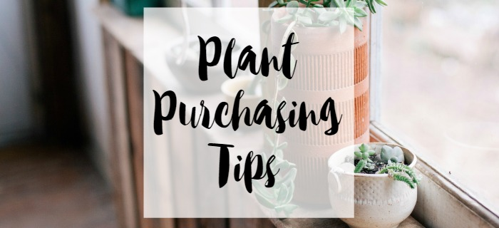 plant purchasin tips