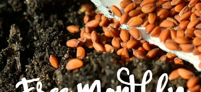 Seed Sorting: My Free System