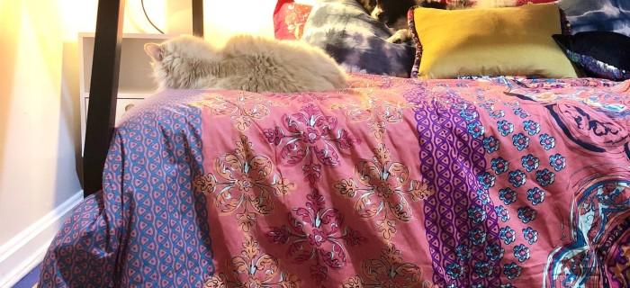 Dog and Cat on boho style bunkbed